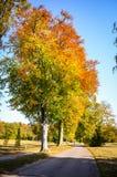 Χρυσός χρόνος φθινοπώρου σε ένα γερμανικό πάρκο Στοκ φωτογραφία με δικαίωμα ελεύθερης χρήσης