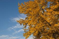 Χρυσός χρόνος φθινοπώρου Στοκ Εικόνες