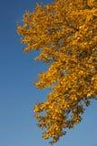 Χρυσός χρόνος φθινοπώρου Στοκ εικόνα με δικαίωμα ελεύθερης χρήσης
