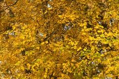 Χρυσός χρόνος φθινοπώρου Στοκ φωτογραφία με δικαίωμα ελεύθερης χρήσης