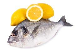 χρυσός ψαριών που απομονώνεται Στοκ φωτογραφία με δικαίωμα ελεύθερης χρήσης