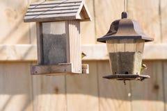 Χρυσός finches που ταΐζει Στοκ φωτογραφία με δικαίωμα ελεύθερης χρήσης