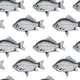 Χρυσόψαρο ψαριών, απομονωμένη γραπτή, πλάγια όψη απεικόνιση αποθεμάτων