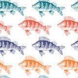Χρυσόψαρο ψαριών, απομονωμένη γραπτή, πλάγια όψη διανυσματική απεικόνιση