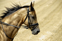 χρυσό άλογο Τουρκμενιστάν Στοκ φωτογραφία με δικαίωμα ελεύθερης χρήσης