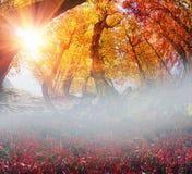 Χρυσό δάσος οξιών Στοκ Εικόνες