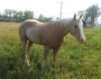 χρυσό άλογο στοκ φωτογραφία με δικαίωμα ελεύθερης χρήσης