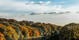 Χρυσό δέντρο πτώσης φθινοπώρου τοπίων Στοκ Εικόνες