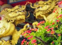Χρυσό γλυπτό δράκων και κόκκινο λουλούδι του αγκαθιού Χριστού στα κινέζικα Στοκ Εικόνες