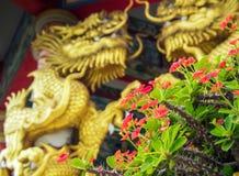 Χρυσό γλυπτό δράκων και κόκκινο λουλούδι του αγκαθιού Χριστού στα κινέζικα Στοκ εικόνες με δικαίωμα ελεύθερης χρήσης