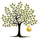 Χρυσό δέντρο αχλαδιών Στοκ εικόνα με δικαίωμα ελεύθερης χρήσης