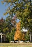 χρυσό δέντρο πτώσης Στοκ Φωτογραφίες