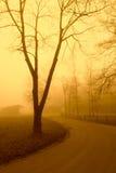 χρυσό δέντρο φθινοπώρου Στοκ φωτογραφίες με δικαίωμα ελεύθερης χρήσης