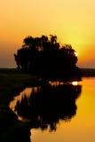 χρυσό δέντρο Στοκ εικόνα με δικαίωμα ελεύθερης χρήσης