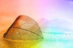 Χρυσό διαφανές φύλλο σε μια όμορφη επιφάνεια με τις πτώσεις νερού σε ένα πολύχρωμο υπόβαθρο Όμορφη καλλιτεχνική εικόνα, εκλεκτική Στοκ εικόνες με δικαίωμα ελεύθερης χρήσης
