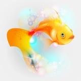 χρυσό λευκό απομόνωσης ψαριών Στοκ φωτογραφίες με δικαίωμα ελεύθερης χρήσης