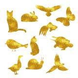 Χρυσό ζωικό σχεδιάγραμμα Στοκ Εικόνες
