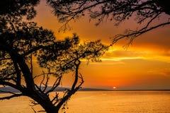 Χρυσό ηλιοβασίλεμα μέσω των δέντρων πεύκων Στοκ εικόνα με δικαίωμα ελεύθερης χρήσης