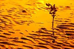 χρυσό ηλιοβασίλεμα σκι&alp στοκ φωτογραφία με δικαίωμα ελεύθερης χρήσης