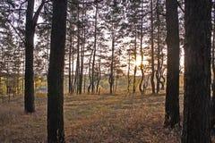 Χρυσό ηλιοβασίλεμα φθινοπώρου Στοκ φωτογραφίες με δικαίωμα ελεύθερης χρήσης
