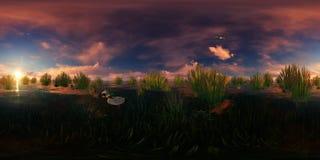 Χρυσό ηλιοβασίλεμα με τις πετώντας και κολυμπώντας πάπιες Στοκ εικόνα με δικαίωμα ελεύθερης χρήσης