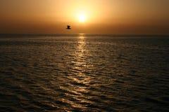 Χρυσό ηλιοβασίλεμα πέρα από τη θάλασσα και το πετώντας πουλί, η Ερυθρά Θάλασσα Στοκ Φωτογραφίες