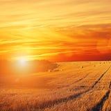 Χρυσό ηλιοβασίλεμα πέρα από τον τομέα με το κριθάρι Στοκ Εικόνα
