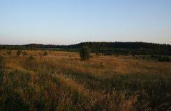 Χρυσό λιβάδι χλόης σε πολωνικό Masuria (Mazury) Στοκ Φωτογραφίες
