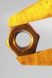 χρυσό καρύδι Στοκ φωτογραφία με δικαίωμα ελεύθερης χρήσης