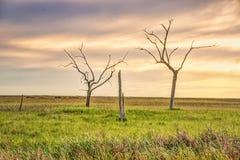 Χρυσό λιβάδι, Λουιζιάνα στοκ φωτογραφία με δικαίωμα ελεύθερης χρήσης