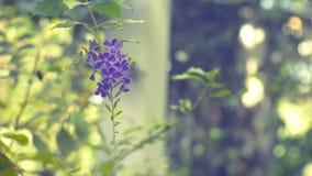 Χρυσό λουλούδι πτώσης δροσιάς με το πράσινο υπόβαθρο bokeh απόθεμα βίντεο