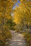 Χρυσό μονοπάτι Στοκ εικόνα με δικαίωμα ελεύθερης χρήσης