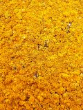 Χρυσό μωσαϊκό λειχήνων Στοκ φωτογραφία με δικαίωμα ελεύθερης χρήσης