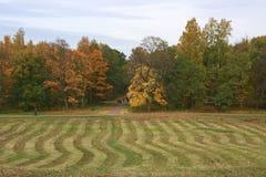 χρυσό πάρκο φθινοπώρου peterhof Στοκ εικόνα με δικαίωμα ελεύθερης χρήσης