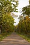 χρυσό πάρκο 2 φθινοπώρου Στοκ εικόνες με δικαίωμα ελεύθερης χρήσης