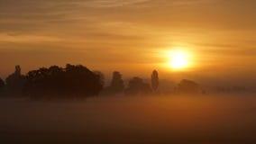 χρυσό πρωί στοκ εικόνες