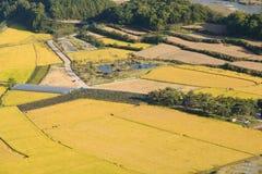 Χρυσό ρύζι ορυζώνα rield Στοκ εικόνες με δικαίωμα ελεύθερης χρήσης