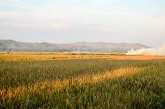 Χρυσό τοπίο τομέων ρυζιού Στοκ Φωτογραφία