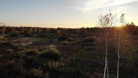 Χρυσό φθινόπωρο και όμορφο ηλιοβασίλεμα Σπασίματα ακτίνων ήλιων μέσω των φύλλων των δέντρων σημύδων Εναέρια άποψη της καλύβας στο απόθεμα βίντεο