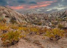 Χρυσό φθινόπωρο σε Cappadocia Τουρκία Στοκ Εικόνες