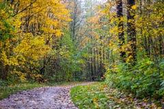Χρυσό φθινόπωρο στο πάρκο της Γκάτσινα Στοκ Εικόνα