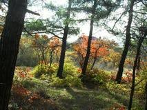 Χρυσό φθινόπωρο Στοκ εικόνες με δικαίωμα ελεύθερης χρήσης