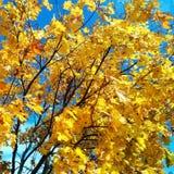 Χρυσό φθινόπωρο Στοκ φωτογραφίες με δικαίωμα ελεύθερης χρήσης