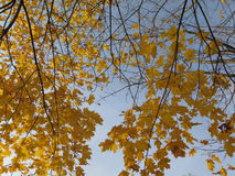 Χρυσό φθινόπωρο Στοκ εικόνα με δικαίωμα ελεύθερης χρήσης