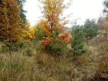 Χρυσό φθινόπωρο στοκ εικόνα