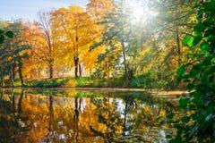 Χρυσό φθινόπωρο στοκ φωτογραφία με δικαίωμα ελεύθερης χρήσης