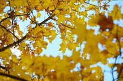 Χρυσό φθινόπωρο στοκ φωτογραφία