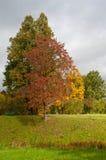 Χρυσό φθινόπωρο Pavlovsk στοκ φωτογραφία