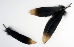 Χρυσό χρυσό φτερό που απομονώνεται στο άσπρο υπόβαθρο Στοκ Εικόνες