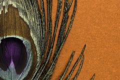 Χρυσό φτερό peacock στο καφετί υπόβαθρο στοκ εικόνα με δικαίωμα ελεύθερης χρήσης